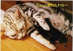 20050730iroha_otsukare